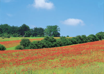 Colourful fields in The Cotswolds